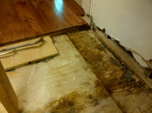 You can see some of the water damage on the subfloor. We scraped the mold and bleached the wood.