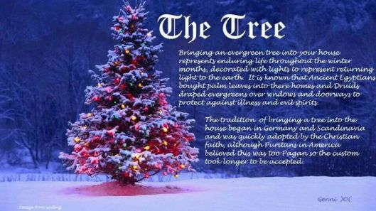 solstice-tree